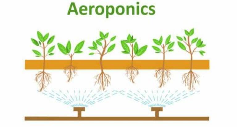 Aeroponics Setup